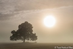 Grensefurua p rhus (Trond Hovland Olsen) Tags: morning fog sunrise landscape telemark morgen furu hst tke soloppgang skien