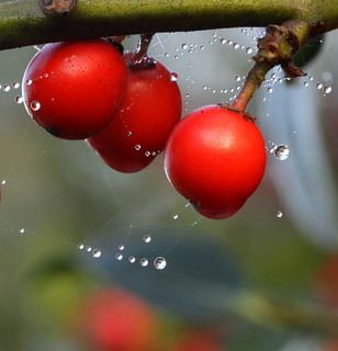 berries and drops