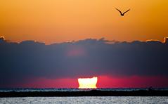 volo libero (_Quasar_) Tags: italia tramonto nuvole volo cielo sole salento gabbiano controluce portocesareo
