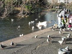 St Stephens Green Dublin (Princey27) Tags: dublin lake birds feedingthebirds