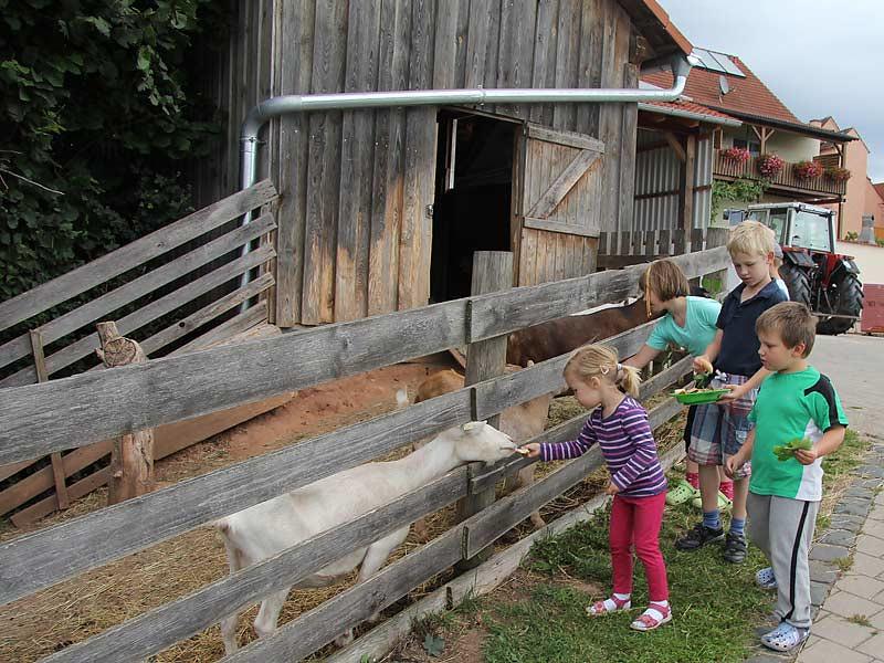 Kastanienhof Selz - Kinder füttern Ziegen