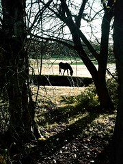 New Forest Pony (Basement68) Tags: camera iphone soemo