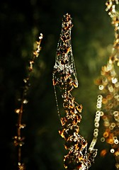 Oh Christmas tree...... (Yasmin de light - Busy) Tags: bokeh spiders spiderweb christmastree sparkle fairy delight fairies 1001nights webs delightful 1001nightsmagiccity