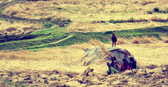 Panikhar village. (Prabhu B Doss) Tags: family boy portrait woman work countryside kid nikon farmers country valley zanskar himalayas ladakh kargil suru jammuandkashmir d80 padum prabhub prabhubdoss panikhar zerommphotography 0mmphotography
