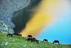morning at the Seven Rila lakes (.:: Maya ::.) Tags: morning wild horses horse mountain lake reflection sunrise lakes bulgaria rila seven           mayaeye mayakarkalicheva