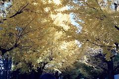 (Kerb ) Tags: japan tokyo december  nippon  analogue kerb tokyouniversity   2011 nikonfg20 kodakgc400 nikkor5018d 201112  nikonfg20film011 47660011 sean kerbwang tokyo2011day4