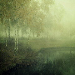 Misty morning (opdrie) Tags: autumn trees mist reflection green nature topf25 water fog silver birch silverbirch