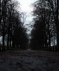 Rhodfa balalwyf Pontcanna (Rhisiart Hincks) Tags: coed zuhaitzak trees gwez arbres craobhan gaeaf negu goañv gouañv hiver winter geamhradh pontcanna caerdydd cardiff kerdiz zuribeltz ezki ezku tei teile tilhenn palalwyfen pisgwydden pisgwydd palawyf lehmus tilleul lime linden basswood tilo tiglio linde زيرفون lindenbaum rhodfa avenue bali kembra wales cymru kembre gales galles tilia achuimrigh landscape tirlun maezioù paisaje tírdhreach paisaia cruthtìre