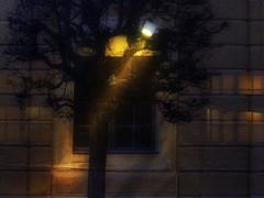 Masked - Schlo Schnbrunn - Potemkin Facade (hedbavny) Tags: wien blue light shadow tree window yellow ast branch sightseeing scaffold shroud renovation verpackung schatten baum shrouded packed schleier restauration sehenswrdigkeit gerst restaurierung schnbrunnpalace eingepackt sterreichaustria verschleiert maskiert potemkinschesdorf eingerstet schlosschnbrunn potemkinfacade