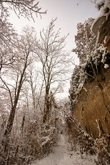 A bit of old (**Alice**) Tags: trees winter sky snow wall citadel wideangle romania 1020mm cer copaci sighioara cetate zpad iarn sony450 geotaggingnotexact