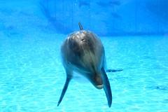 388 (valentinwhale) Tags: dolphin killer whale dauphin antibes marineland otarie steller orque