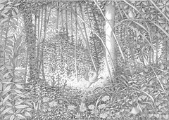 Koo Koo (ErikBerndt) Tags: wood leaves birds illustration forest pencil drawing jungle wald baum zeichnung