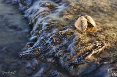 Sea Shell (sparkeyb) Tags: longexposure sea water marina photoshop 35mm flow nikon raw shell adobe seashell flowing essex topaz ndfilter giottos tollesbury cs5 d7000 2011assignment sparkeyb