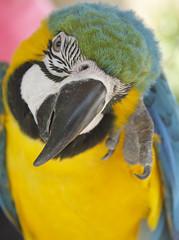 _MG_1859 (James_Roberts) Tags: bali holiday october 2011 tamanburungbalibirdpark