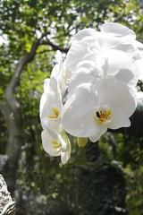 _MG_1890 (James_Roberts) Tags: bali holiday orchid october 2011 tamanburungbalibirdpark