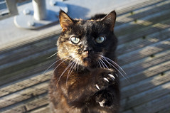 (Darren-Muir) Tags: light sun cat out doors sitting looking side kitty down whiskers shade paws straight claws pawing