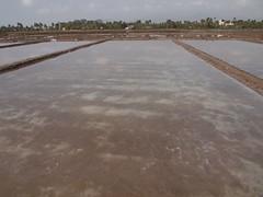 Salt fields (Kampot, Cambodia 2012)