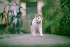 Fushya has not reached the focal range. (SOVA5) Tags: film cat 50mm nikonfe focalrange nikkor50mm14 fushya konicacolor100expired2005