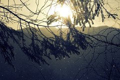 II (hannedale) Tags: light sun tree norway rural landscape dale branches snowing tre noreg sunnfjord photoshopxprocess indierekte
