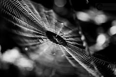 Masterpiece... (Pablin79) Tags: light bw white black macro water argentina monochrome closeup digital canon river eos spider reflex dof bokeh web 5d 28 parana pipa misiones markii sanignacio 105mm 2011 bokah bookeh sigma105mmexdgf28macro canoneos5dmarkii teyucuare 5dmkii pabloreinsch pabloreinschphotography pablin79