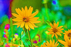 Yellow wildflower painted photo (grimeshome) Tags: yellow flower nature digitalphotopainting painting paint painted flowers grimeshome davidgrimesphotography davidgrimesphotographer grimeshomephotography
