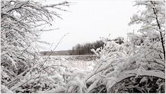 Winter snow (blmiers2) Tags: park trees winter white snow nature pond nikon mendon explore coolpix ponds s3000 explored blm18 blmiers2