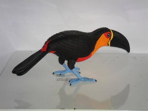 R. vitellinus ariel (3)