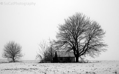 Winter Solitude (socalgal_64) Tags: trees winter blackandwhite bw mist snow cold building abandoned nature silhouette misty barn rural landscape northampton natural pennsylvania snowy foggy scenic pa snowing shack stark snowfall lehighvalley snowscape musictomyeyeslevel1 howardsgallerysubmitted
