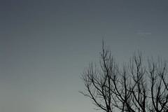 skyline 02 (l. st.utz) Tags: trees winter sky moon tree nature beautiful silhouette night season photography evening twilight branch branches shapes silhouettes minimal minimalism shape pure minimalistic lillian stutz puristic purism