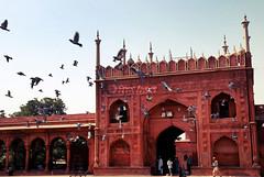 Envol cleste / Heavenly flight (Clment Racineux) Tags: india pigeon delhi muslim flight mosque inde mosque jamamasjid envol musluman