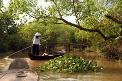 Balade dans la mangrove... (David Rosset) Tags: delta vietnam mangrove be cai mekong sud
