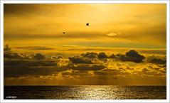 La libertad de las gaviotas. (orojose) Tags: colorphotoaward mygearandme