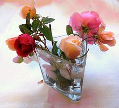 Roses for my Flickr friends (Marlis1) Tags: roses glass spain vase catalunya rosen rosas glas tortosa marlies ilroseto