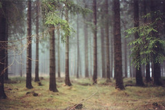 Can't see the wood for the trees (_anke_) Tags: wood travel trees winter tree film misty fog analog forest 35mm canon woodland germany deutschland reisen travels nebel ae1 foggy analogue canonae1 kalt wald bume baum harz canonfd 2011 straightoutofthecamera neblig fdlens filmisnotdead fd50mm sooc kleinbild filmsnotdead 122011 filmlebt ankeschroeder ankeschrder