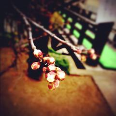 梅の花今少し、春待ちかな