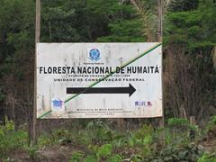 080 Floresta Nacional de Humaitá - Amazonas (Nelson Luiz Wendel) Tags: parque floresta nacional amazonas amazonia devastação humaitá desmatamento desflorestamento