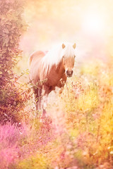 Summertime (ingrid.schnelle) Tags: pink flowers summer portrait horse pet sun color cute nature animal norway canon eos daylight norge colorful day bright mark magic memories dream pony fantasy ii 5d summertime usm lovely northern magical hest ef70200mm f28l