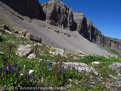 Cliffs and Flowers in Upper Darby Canyon (Trail Route) (Anne's Travels 4) Tags: wildflowers wyoming tetons grandtetonnationalpark jedediahsmithwilderness darbycanyon upperdarbycanyon