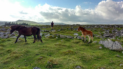 Mother and Child (AndyB59) Tags: may pony motorola gutter tor dartmoor foal 2016 sheepstor motog3