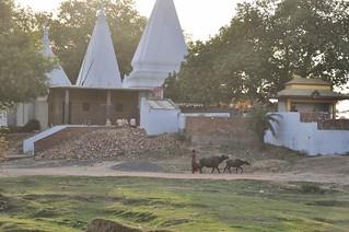 bodhgaya - inde 65