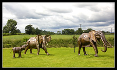 Wild Elephants in a Shropshire Field - Surely Not (Audrey A Jackson) Tags: canon60d britishironworkscentre shropshire metal elephants artwork history 1001nightsmagiccity