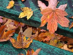 Autumn leaves (ela_s) Tags: park autumn leaves canon bench krakow jesień liście ławka