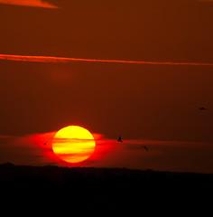 Rise and shine (Rik Hermans) Tags: red sun netherlands birds sunrise shine african nederland vogels kom rik afrikaans hermans sittard mistig omhoog zonnetje schaduwen zonsopkomst silhouetten rikhermans hermansrik