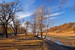 DSC_4277 (d3xmeister) Tags: blue autumn sky colors alexandria forest nikon romania 1855mm nikkor polarizer teleorman d5100