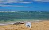 Hawaiian Monk Seal (jcc55883) Tags: ocean hawaii sand nikon oahu pacificocean seal endangeredspecies hawaiianmonkseal d40 kaalawaibeach nikond40 diamondheadroad