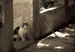 144/365 (Mnica Etcheverry) Tags: life light pet art luz monochrome animal cat photo spring nikon focus december day shadows live dia gato frame mascota sharpness encuadre 2011 project365 d3100
