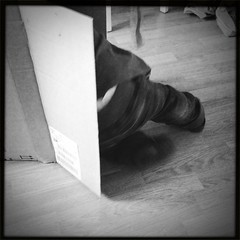Hide 21/12/11 #project365 ) (tyhopho) Tags: december 21st 2011 project365