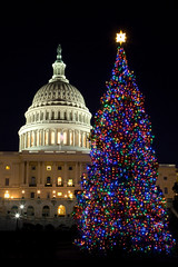 Capitol Christmas Tree (Rozanne Hakala) Tags: christmas usa building tree tourism night america outdoors lights star dc washington districtofcolumbia holidays tourist christmaslights uscapitol capitol congress dome nationalmall capitolhill senate legislative nationscapital freedomstatue peoplestree rozannehakala