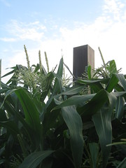 Helpful Corn (Wyrmworld) Tags: garden corn artgallery australia perth cbd maize westernaustralia communitygarden culturalcentre