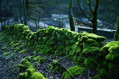 Moss. (sidibousaid60) Tags: uk moss buxton derbyshire peakdistrict drystonewall cunningdale